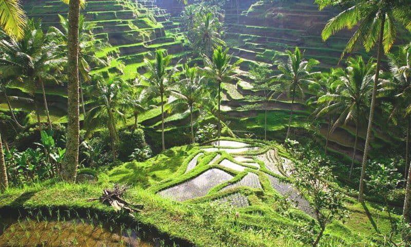 ubud day tour